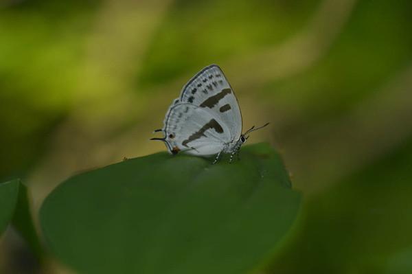 2012629mizuiroonaga4