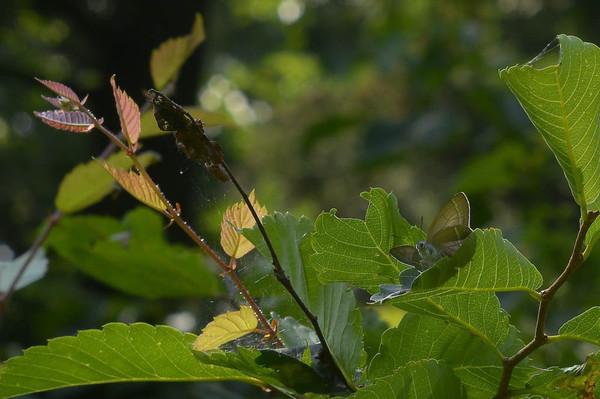2012629ohmidori1