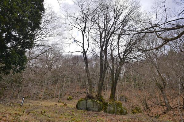 201352kamaishiishiwarizakura