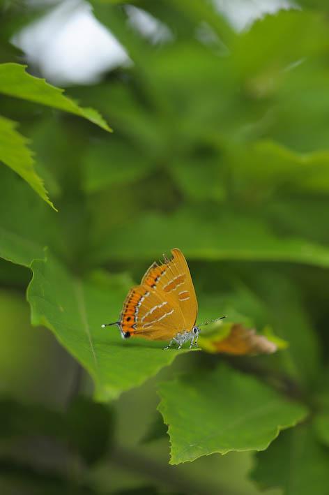 2011628akashijimi